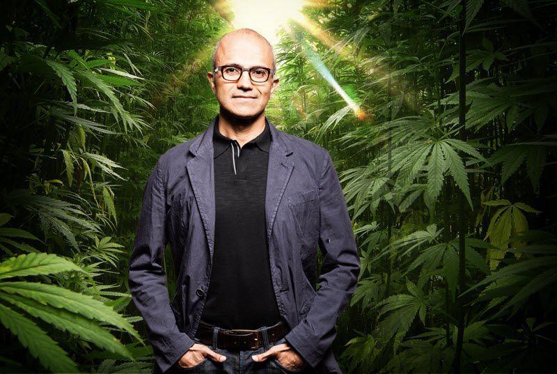 Microsoft заинтересована в разработке ПО для легального рынка марихуаны